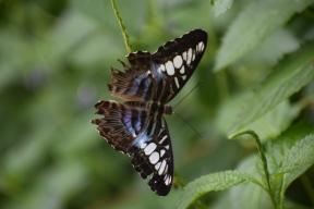 Callaway-Gardens-Butterfly