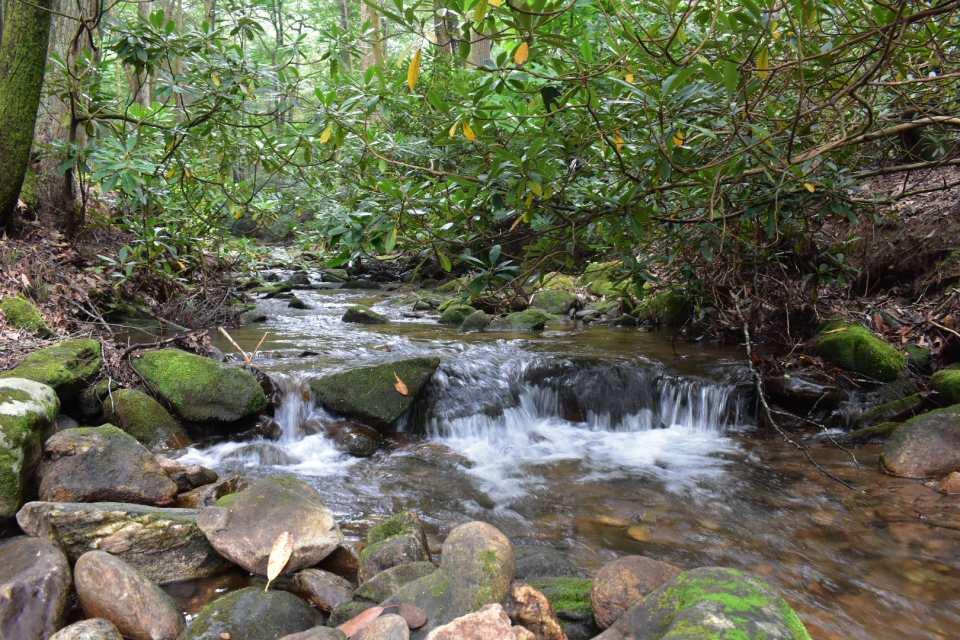 Creek-behind44