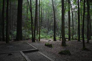 Vogel State Park Site 44