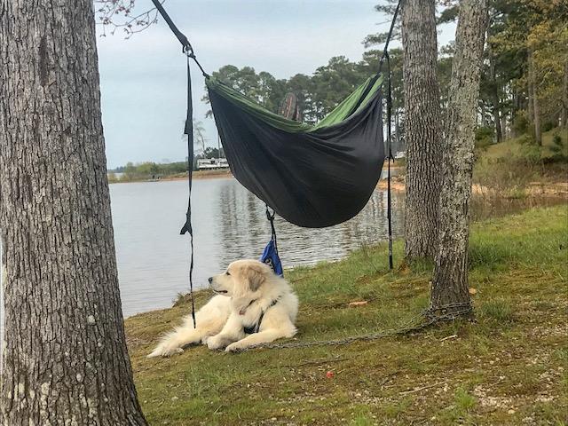 eno-hammock