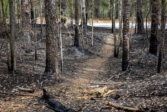 forrest-burn