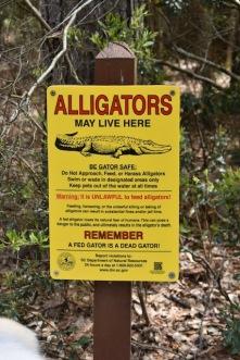 gators-beware