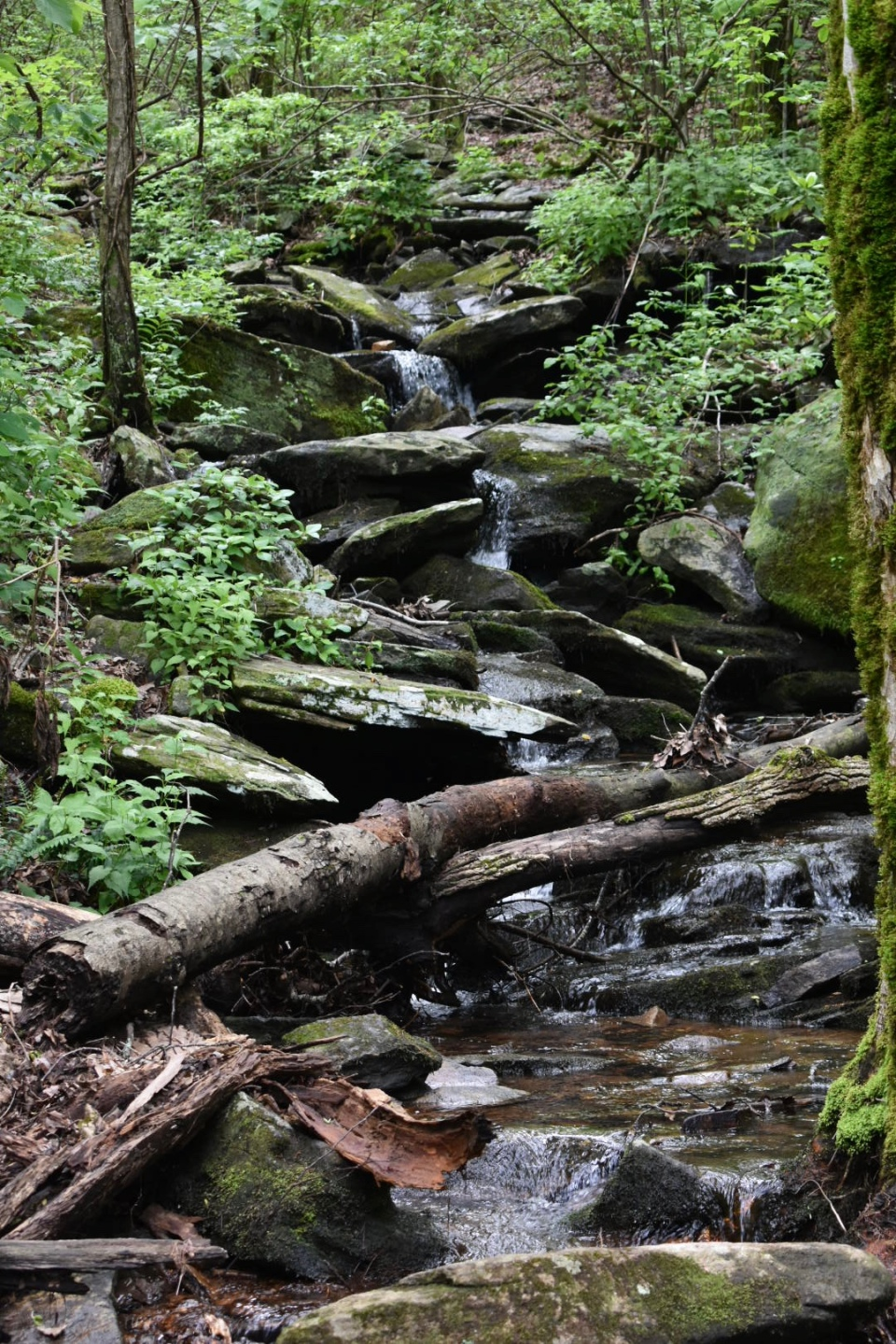 big-rock-trail-creek