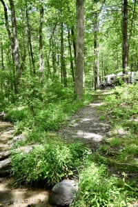 trail-to-creek-site-19-fort-mountain