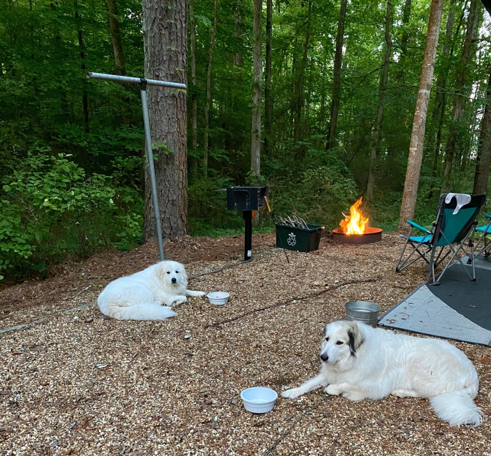 camping-with-dogs